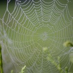 Spider web with drops of dew